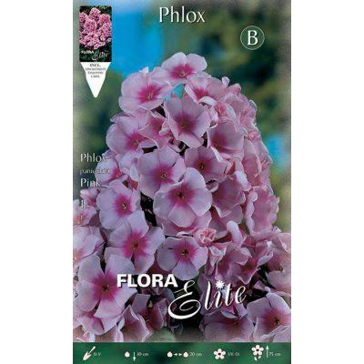 844973 Phlox Paniculata Pink