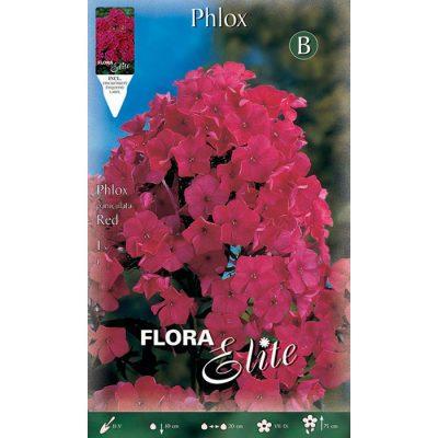 844621 Phlox Paniculata Red