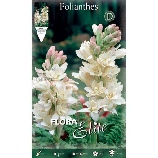 847073 Polianthes Tuberosa