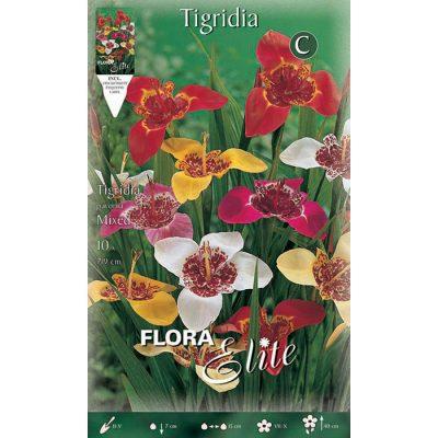 850578 Tigridia Pavonia Mixed