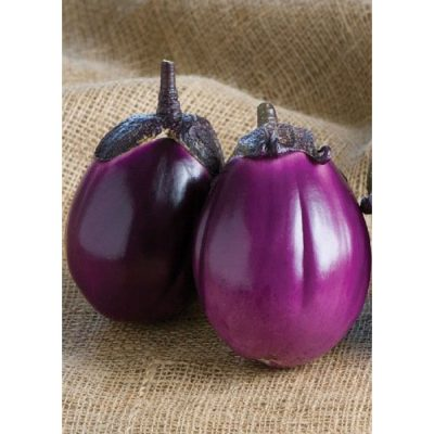 13806 Beatrice F1 Μελιτζάνα - Solanum melongena