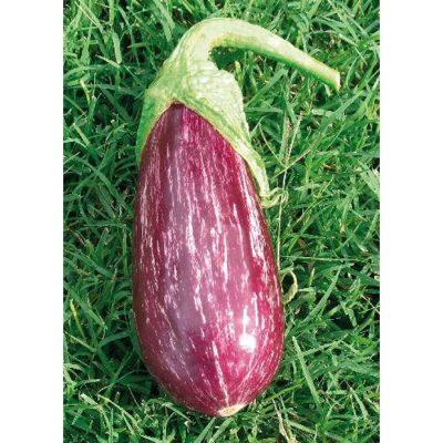 13808 Nubia F1 Μελιτζάνα - Solanum melongena