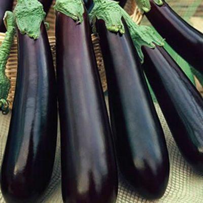 PR 7903 Violetta Lunga - Μελιτζάνα - Solanum melongena