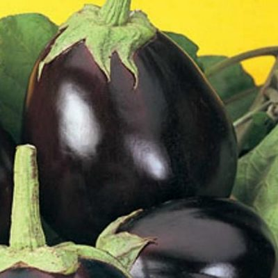 PR 7906 Violetta di New York - Μελιτζάνα - Solanum melongena