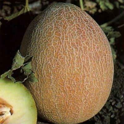 DF 6012 Ananas - Πεπόνι (Cucumis melo)