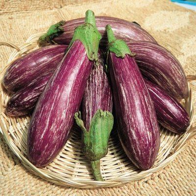 PR 7902 Tsakoniki - Μελιτζάνα - Solanum melongena