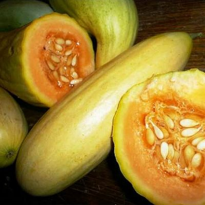 DF 6025 Banana Melon – Πεπόνι (Cucumis melo)