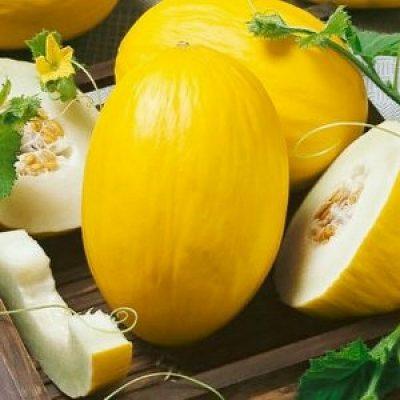 DF 6224 Canary Yellow – Πεπόνι (Cucumis melo)