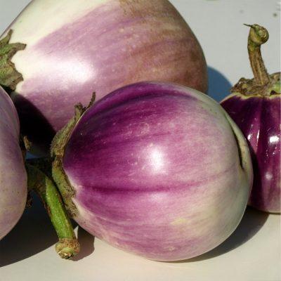 ΜΤ 7001 Rosa Bianca - Μελιτζάνα - Solanum melongena
