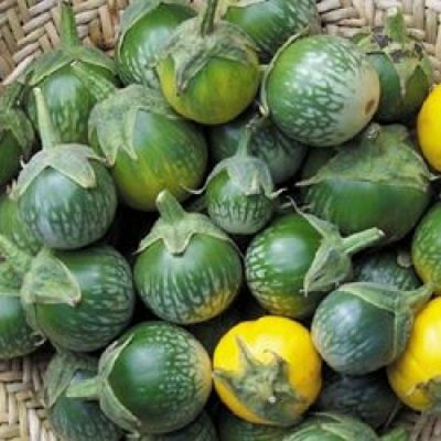 ΜΤ 7002 Green Tiger Stripe - Μελιτζάνα - Solanum melongena