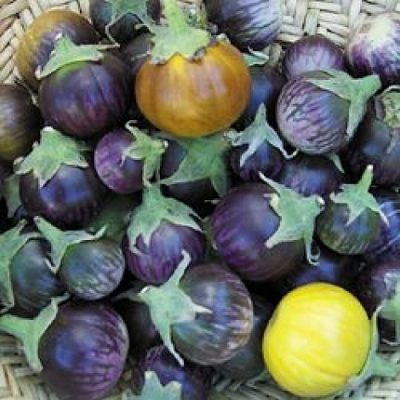 ΜΤ 7003 Purple Tiger Stripe - Μελιτζάνα - Solanum melongena