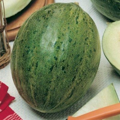 DF 6223 Valenciano Temprano – Πεπόνι (Cucumis melo)