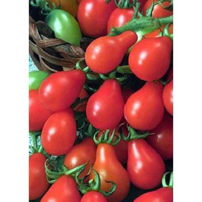 13414 Red Pear - Ντομάτα - Lycopersicon esculentum