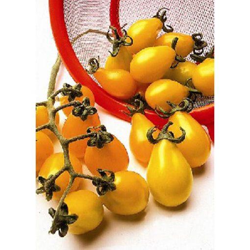 13418 Yellow Pearshaped - Lycopersicon esculentum