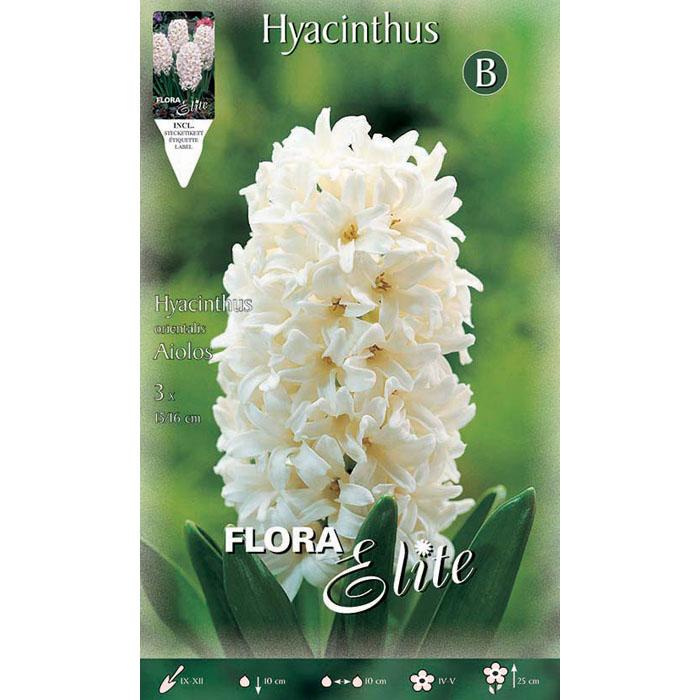 791734 Hyacinthus - Ζουμπούλι Aiolos
