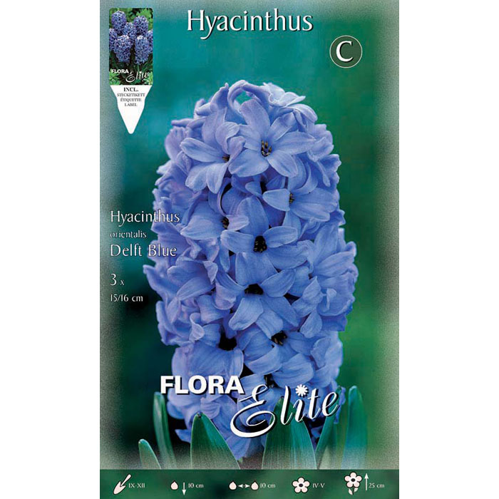 109904 Hyacinthus - Ζουμπούλι Delft Blue