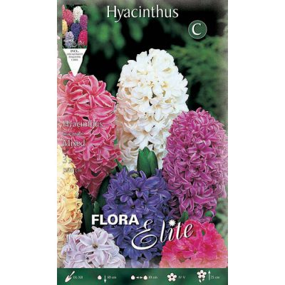 134401 Hyacinthus Mixed