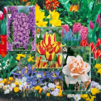 Fall Planting Bulbs In Packets
