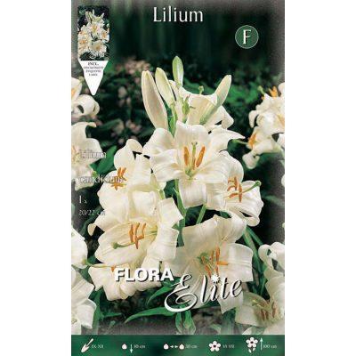 474606 Lilium Candidum