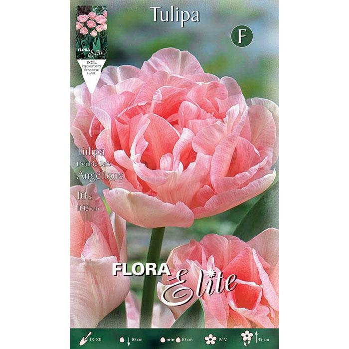 200908 Tulipa – Τουλίπα Angelique