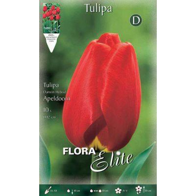201608 Tulipa – Τουλίπα Apeldoorn