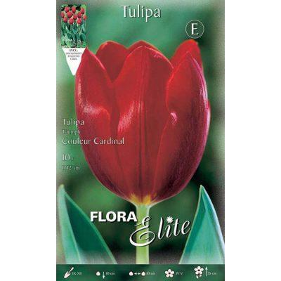 215605 Tulipa - Τουλίπα Couleur Cardinal