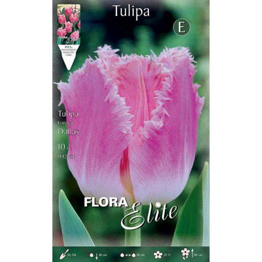 518430 Tulipa – Τουλίπα Dallas