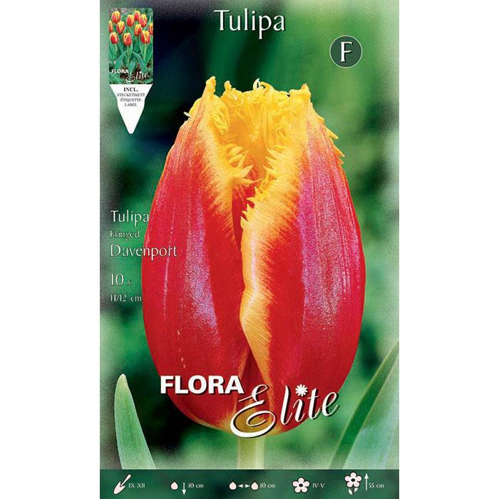 789298 Tulipa – Τουλίπα Davenport
