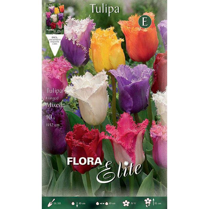 267055 Tulipa – Τουλίπα Fringed Mixed