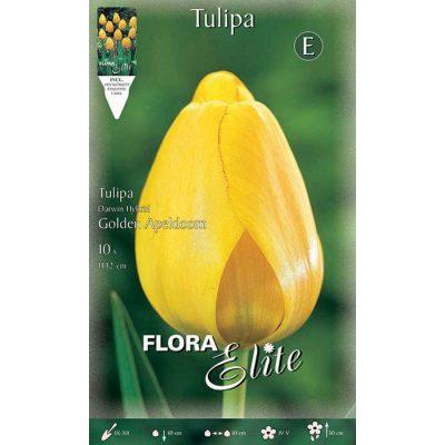 221903 Tulipa – Τουλίπα Golden Apeldoorn