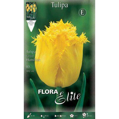 224423 Tulipa – Τουλίπα Hamilton