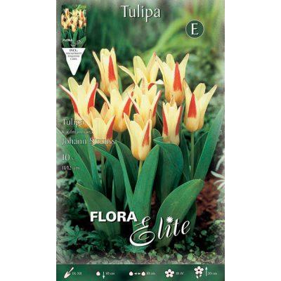 228209 Tulipa – Τουλίπα Johan Straus