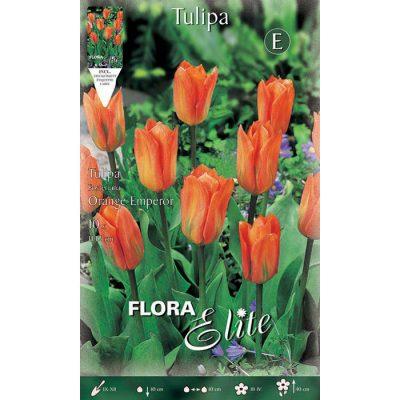 233319 Tulipa – Τουλίπα Orange Emperor