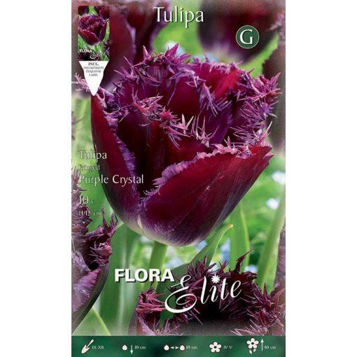 789304 Tulipa – Τουλίπα Purple Crystal
