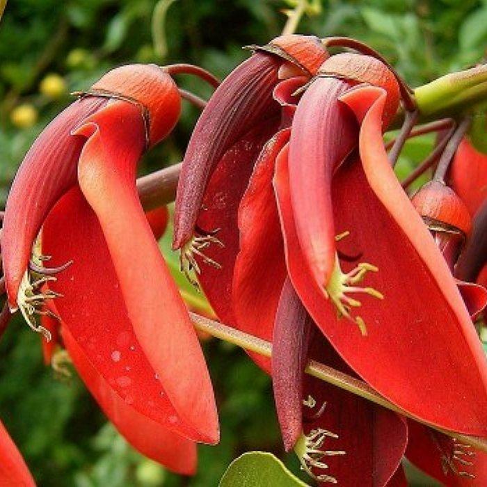 Σπόροι τροπικών φυτών και λουλουδιών