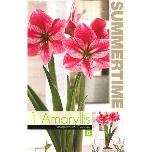 9137 Amaryllis Gervase