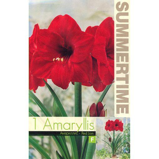 9253 Amaryllis Red Lion