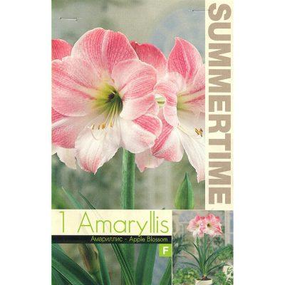 9254 Amaryllis – Αμαρυλλίς Apple Blossom