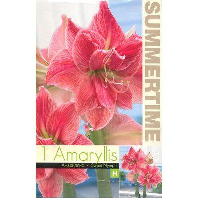 9333 Amaryllis Sweet Nymph