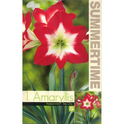 9335 Amaryllis Tres Chic