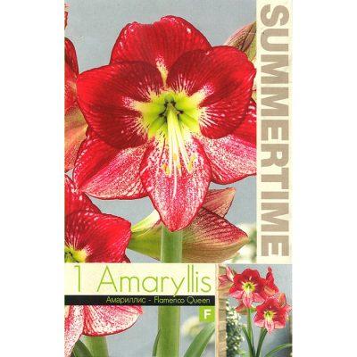 9346 Amaryllis – Flamenco Queen
