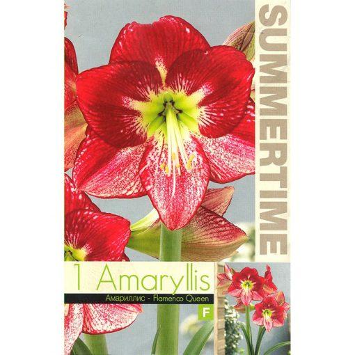 9346 Amaryllis – Αμαρυλλίς Flamenco Queen