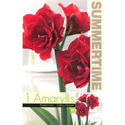 9347 Amaryllis Cherry Nymph