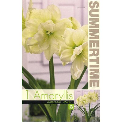 9374 Amaryllis Marylin