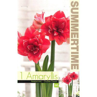9382 Amaryllis Double Dream