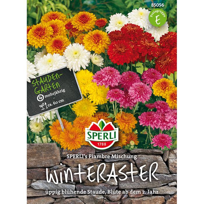 Fabelhaft 85056 - Chrysanthemum indicum - Valentine E-shop @HY_16