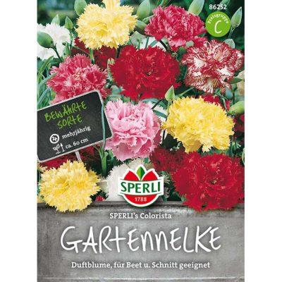 86252 - Dianthus caryophyllus