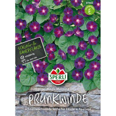 87461 - Ipomoea purpurea