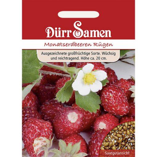 DS0565 - Φράουλα αρωματική - Fragaria vesca