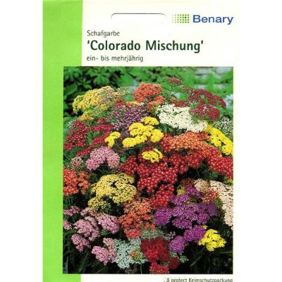 "A0160 - Achillea millefolium ""Colorado Mix"""